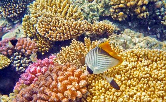 Коралловый риф отеля Мелиа