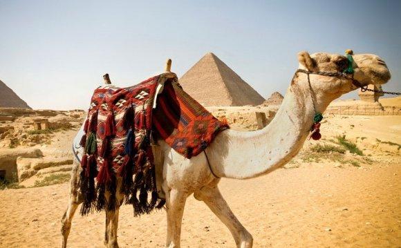 туры в египет горящие путевки